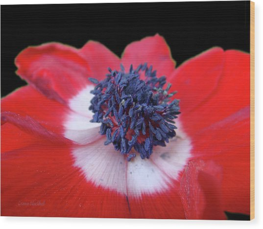 Blossoming Freedom Wood Print