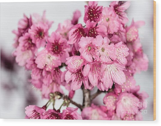 Blossoms 3 Wood Print