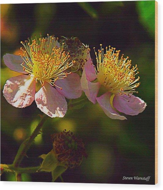 Blossoms.1 Wood Print