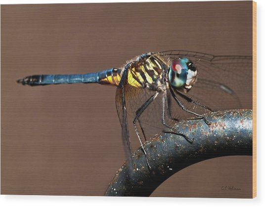 Blue And Gold Dragonfly Wood Print