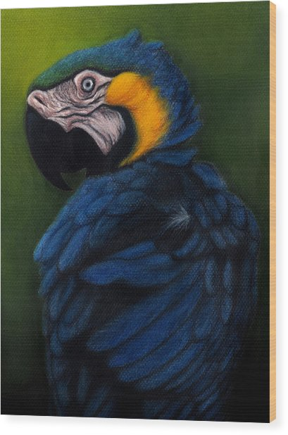 Blue And Gold Macaw Wood Print by Enaile D Siffert