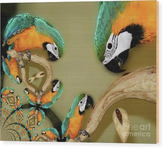 Blue And Gold Macaw Parrot Abstract Wood Print