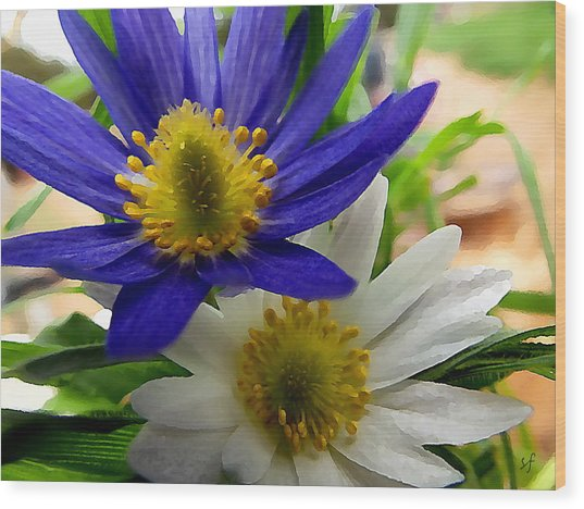 Blue And White Anemones Wood Print