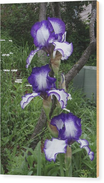 Blue And White Iris Monet Like Wood Print