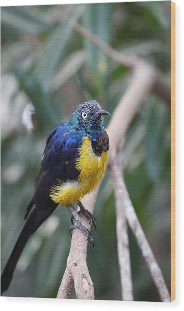 Blue And Yellow Bird Wood Print by Mark Platt