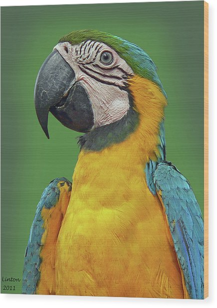 Blue-and-yellow Macaw Wood Print