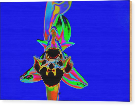 Blue Bee Orchid Wood Print