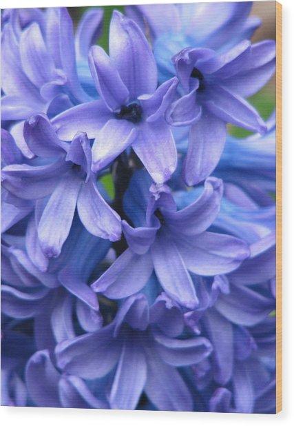 Blue Belles Wood Print by Staci-Jill Burnley