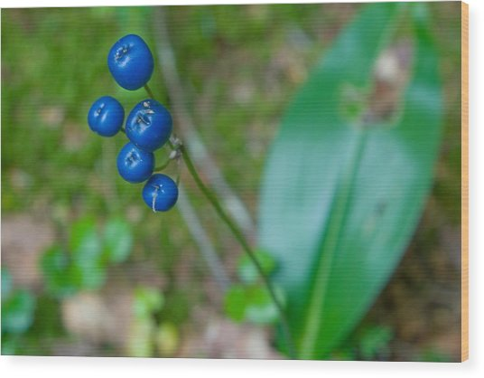 Blue Berries Wood Print