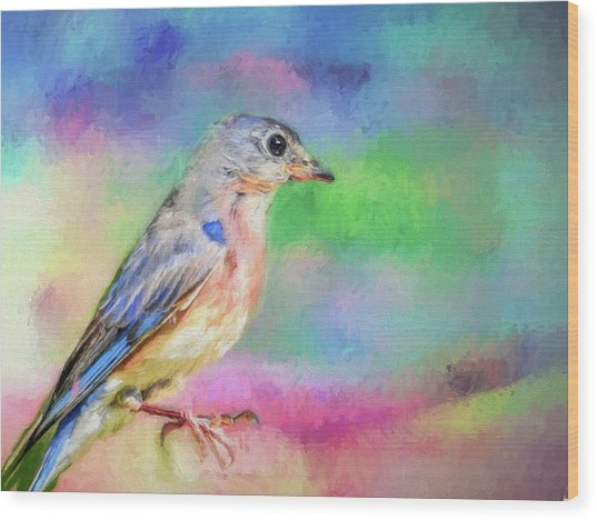 Blue Bird On Color Wood Print