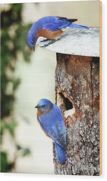 Blue Birds Are Moving In Wood Print