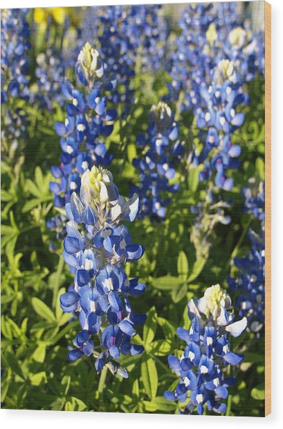 Blue Bonnets Wood Print by James Granberry