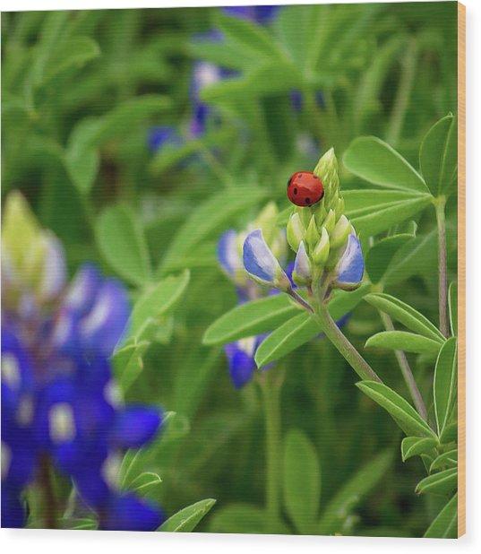 Texas Blue Bonnet And Ladybug Wood Print