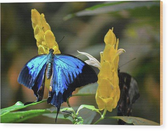 Blue Beauty Butterfly Wood Print