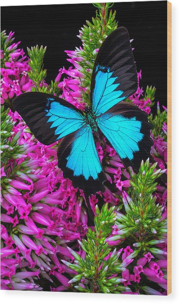 Blue Butterfly On Heather Wood Print