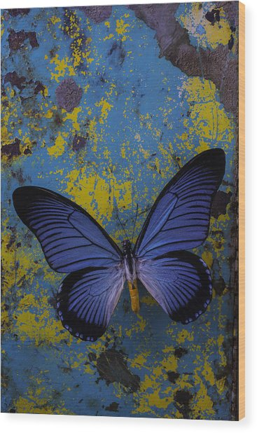 Blue Butterfly On Rusty Wall Wood Print