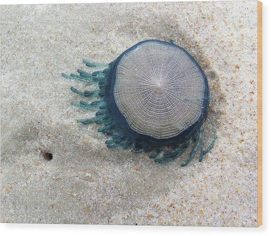 Blue Button #2 Wood Print