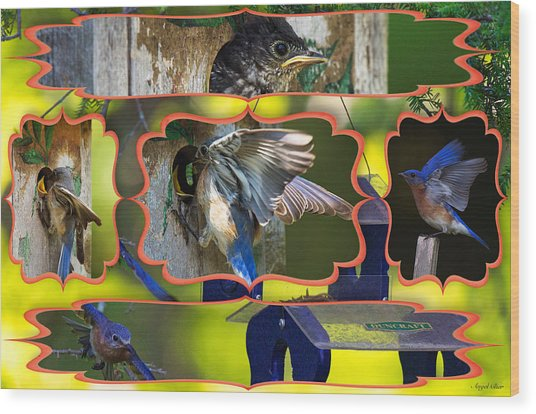 Wood Print featuring the photograph Blue Collage 2 by Angel Cher