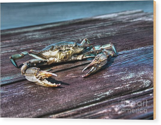 Blue Crab - Above View Wood Print