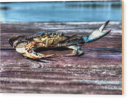 Blue Crab - Big Claws Wood Print