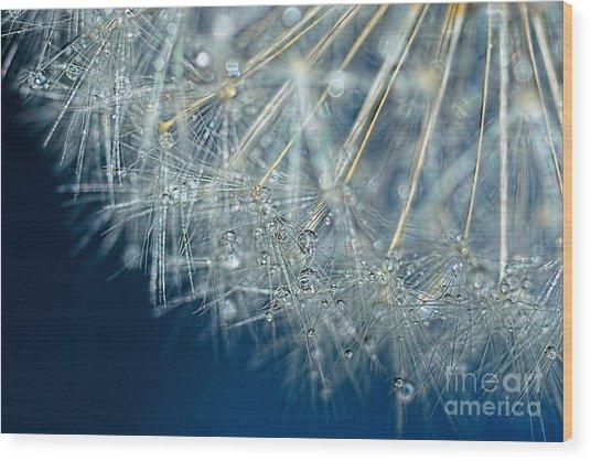 Blue Dandelion Dew By Kaye Menner Wood Print