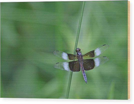 Blue Dragonfly Wood Print by Tina B Hamilton