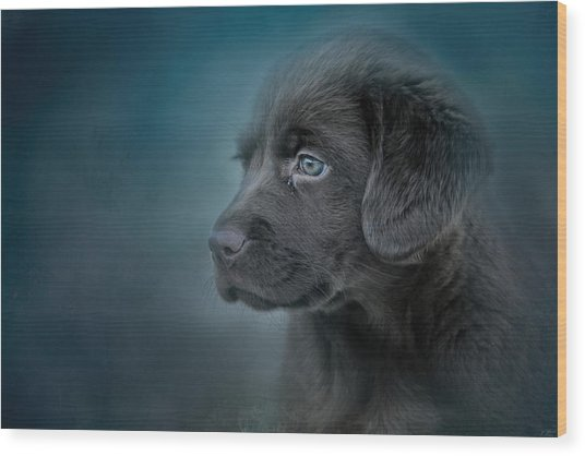 Blue Eyed Puppy Wood Print