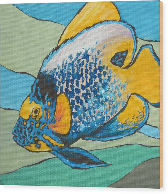 Blue Face Angelfish Wood Print by Sandy Tracey