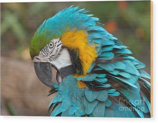 Blue-green-yellow Macaw Wood Print by Svetlana Ledneva-Schukina