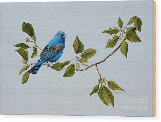 Blue Grosbeak Wood Print
