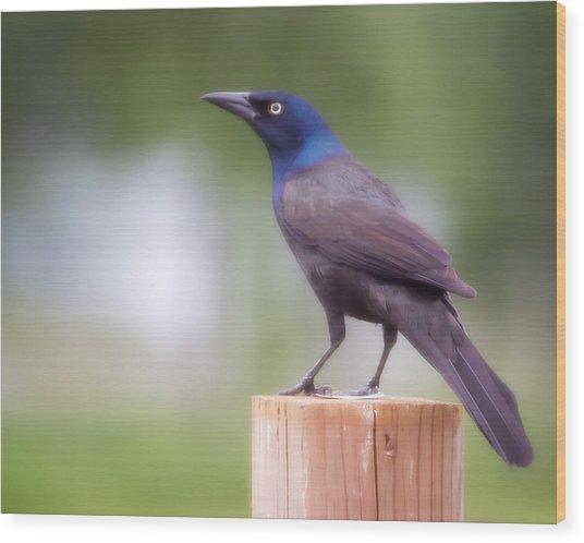 Blue Head Wood Print