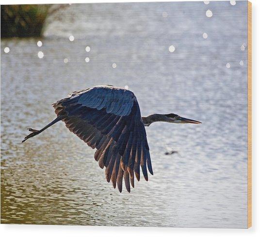 Blue Heron Aglow Wood Print by Charlie Osborn
