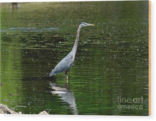 Blue Heron Wood Print by Brian Kalbe