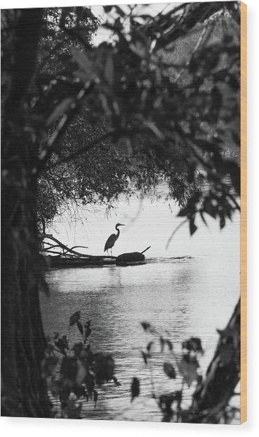 Blue Heron In Black And White. Wood Print