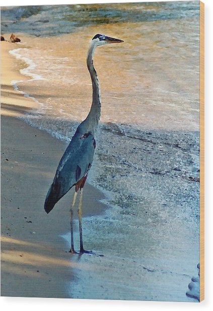 Blue Heron On The Beach Close Up Wood Print