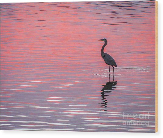 Blue Heron - Pink Water Wood Print