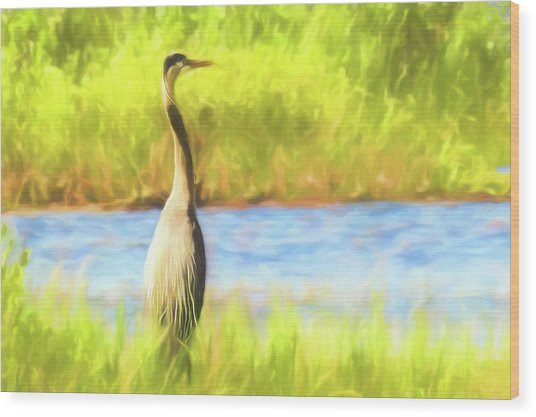 Blue Heron Standing Tall And Alert Wood Print