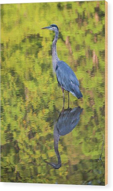 Blue Heron Wading Wood Print