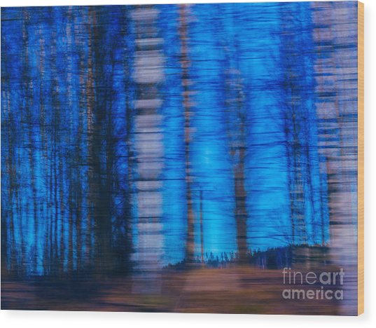 Blue Hour In Birch Forest Wood Print
