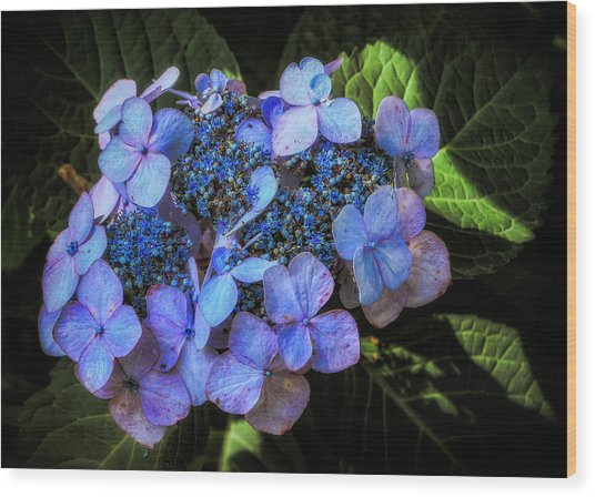 Blue In Nature Wood Print