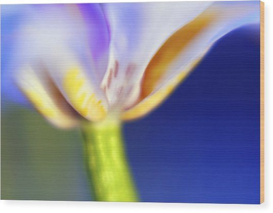 Blue Iris 2 Wood Print by DRK Studios