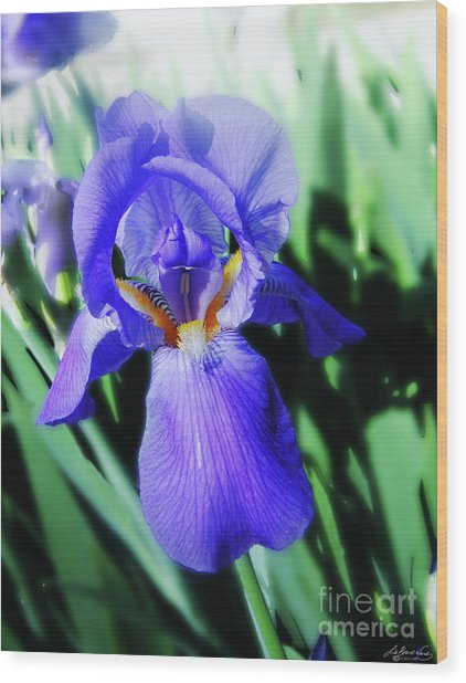 Blue Iris 2 Wood Print