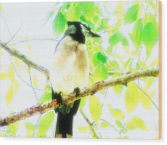 Blue Jay IIi Wood Print