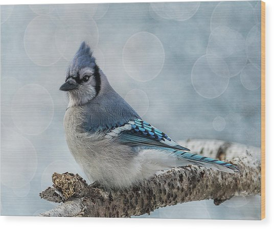 Blue Jay Perch Wood Print
