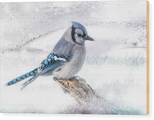 Blue Jay Snow Wood Print