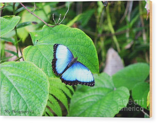 Wood Print featuring the photograph Blue by Marty Gayler