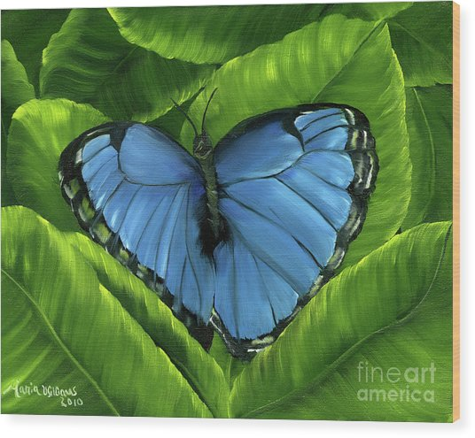 Blue Night Butterfly Wood Print by Maria Williams