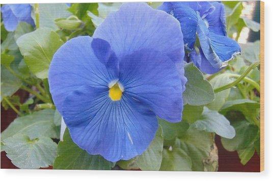 Blue Pansy Flower Wood Print