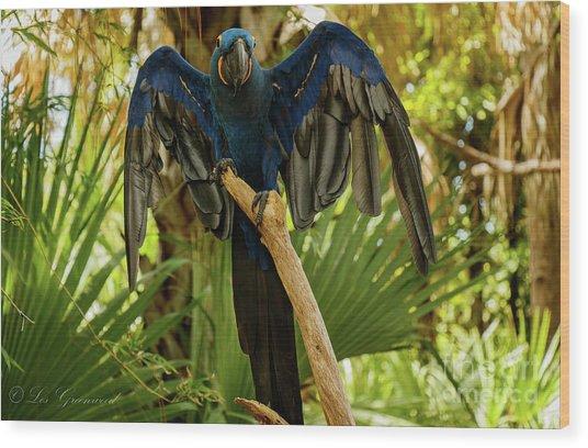 Blue Parrot Wood Print