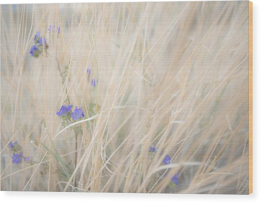 Blue Phacelia Wood Print